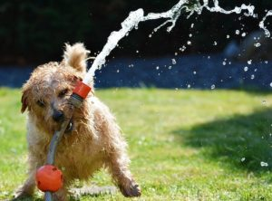 Shelter Mutt Water Hose